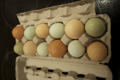 Beautiful rainbow eggs from Sucellus Farms.
