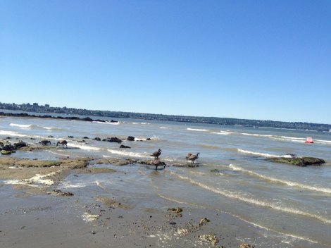 Next, we headed to Second Beach. It was warm and sunny, and the tide was out.