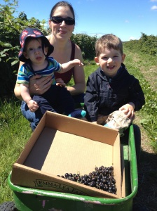 Berry picking.